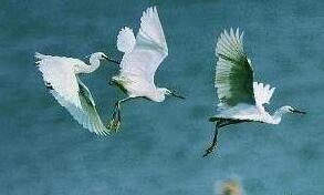 合法狩猎,促进生态平衡
